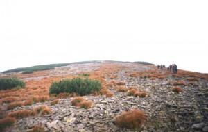 Серед сивих гір Ґорґан