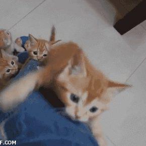 Коли Мурлики агітують вступити у свій курінь