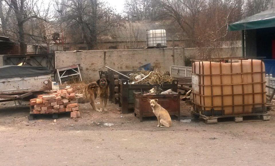Тварини на лінії фронту