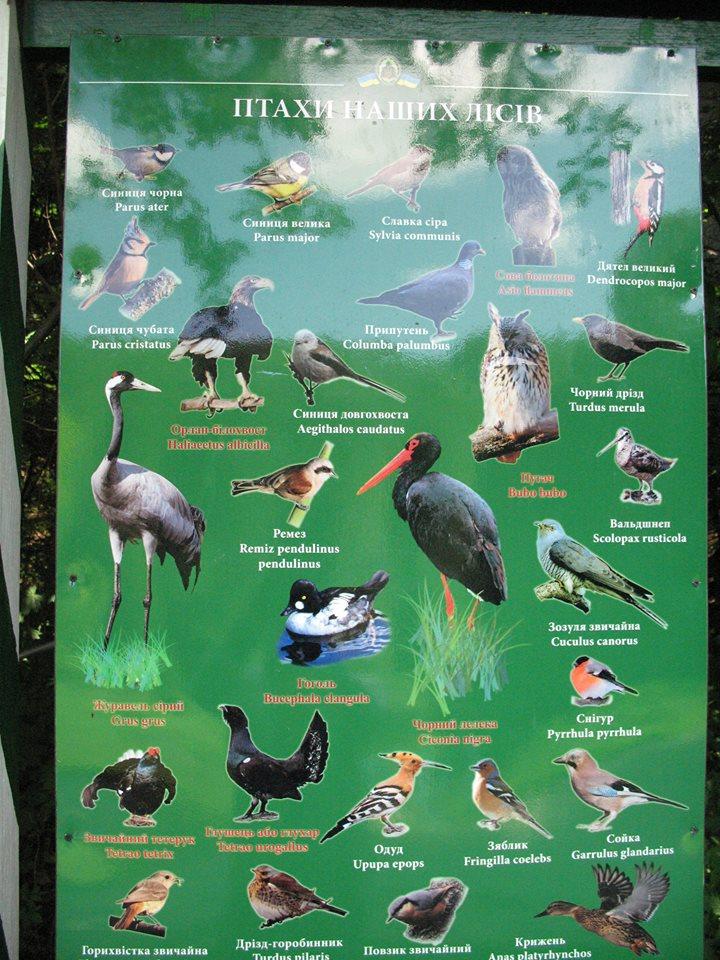 Синиці та інші птахи водяться у місцевих краях давно