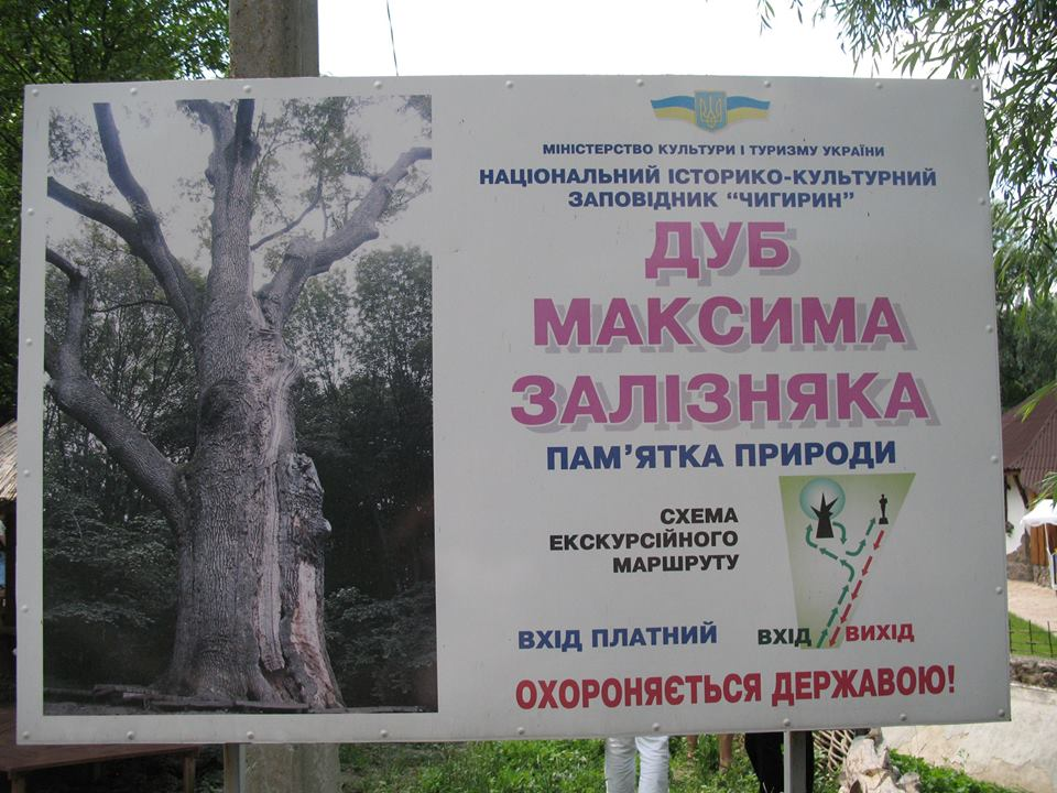 Дуб Максима Залізняка
