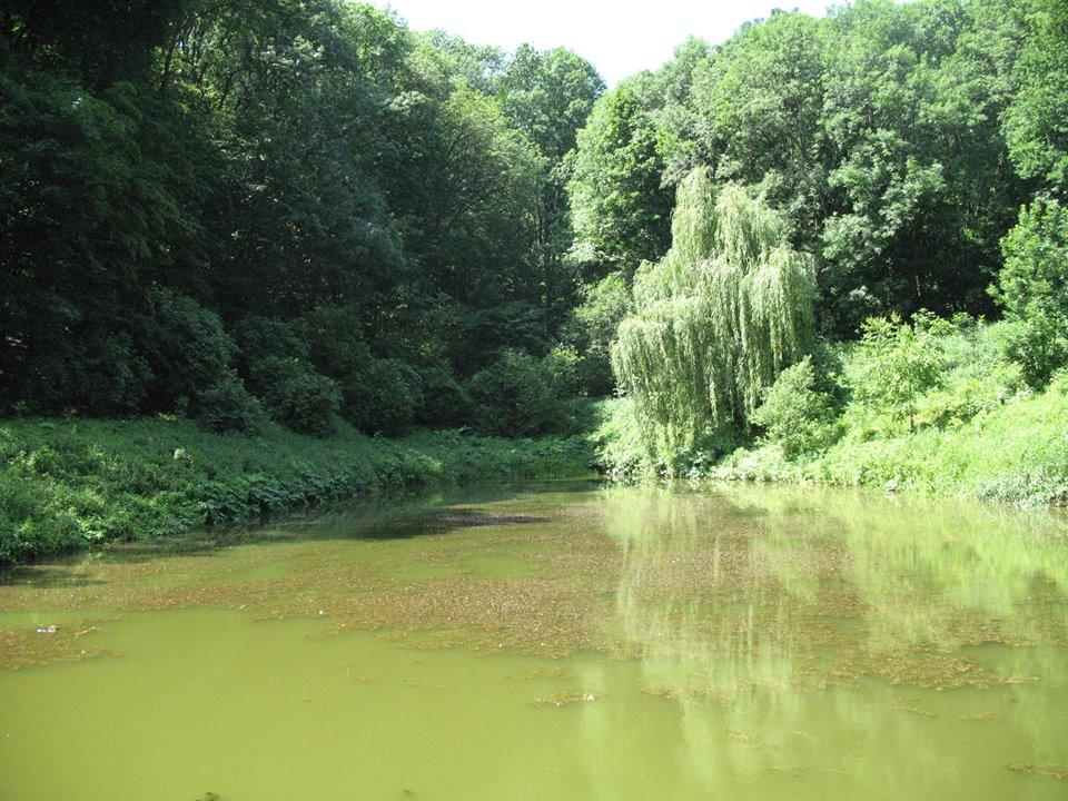 Гайдамацький ставок — ставок біля Мотронинського монастиря